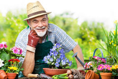Senior in the flower garden Royalty Free Stock Images