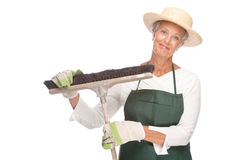 Senior gardener Royalty Free Stock Images