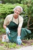 Senior gardener Stock Photo