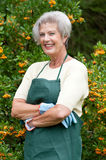 Senior gardener Stock Images