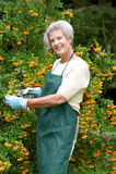 Senior gardener Royalty Free Stock Photography