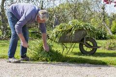 Senior gardener with barrow. Senior man gardener with full barrow in garden sun shine stock photos
