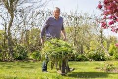Senior gardener with barrow. Senior man gardener with full barrow in garden sun shine royalty free stock image