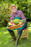 Senior gardener with a basket of various vegetables. In the garden Stock Photography