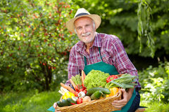 Senior gardener with a basket of vegetables Royalty Free Stock Photography