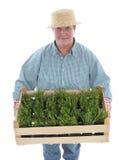 Senior gardener with box of aspic Stock Photos