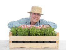 Senior gardener with box of aspic Royalty Free Stock Photography