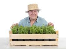 Senior gardener with box of aspic Royalty Free Stock Photo