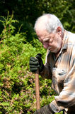 Senior gardener  closeup Stock Photography