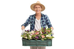 Senior gardener holding a bunch of flowers Royalty Free Stock Images