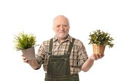 Senior gardener holding plant smiling. Senior gardener man holding plant smiling, white background stock images