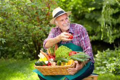 Senior gardener is presenting a basket full of vegetables Royalty Free Stock Images