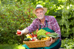 Senior gardener is presenting a big basket with vegetables Stock Photography