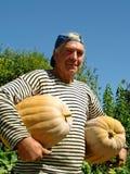 Senior gardener with pumpkins Stock Image