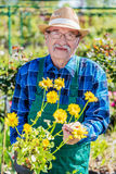Senior gardener showing a potted flower. stock image