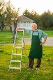 Senior gardener with stepladder. Man in apron outdoors Royalty Free Stock Image