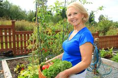 Senior gardener and vegetables. Stock Photo