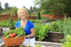 Senior gardener and vegetables. Royalty Free Stock Photo