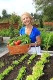 Senior gardener and vegetables. Royalty Free Stock Photos