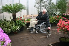 Senior gardener in wheel chair and a cat in green house Stock Photos