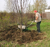 Senior gardener  working Stock Photography
