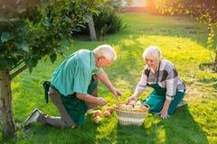 Senior gardeners couple near tree. Stock Photos