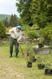 Senior gardening 2. Senior shovelling his garden Stock Photos