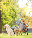 Senior gentleman on bench with his dog relaxing in a park. Senior gentleman seated on wooden bench with his labrador retriever relaxing in a park, shot with a Royalty Free Stock Photos