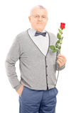 Senior gentleman holding a red rose isolated on white background Royalty Free Stock Image