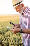 Gray-haired agronomist or farmer examining wheat seeds under the magnifying glass in the field, looking for aphid or other parasit stock photography