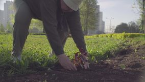 Free Senior Green Activist Planting A Flower In A City Royalty Free Stock Photo - 147950475