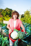 Senior grows harvest in the garden Royalty Free Stock Images