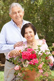 Senior Hispanic Couple Working In Garden Tidying Pots Stock Image