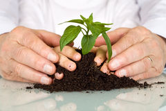Senior and kids hands pampering a new plant Royalty Free Stock Images
