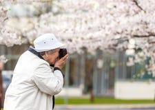 Senior kobiety mienia rocznika filmu pełnoletnia kamera i fotografować kwitnącego czereśniowego drzewa ogród fotografia royalty free
