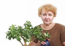 Senior lady Stock Image