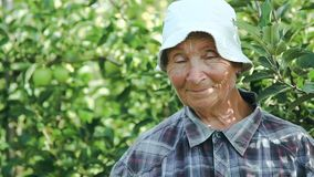 Senior lady and apples. Senior lady with apples. Elderly woman smiling, showing apple harvest. Garden female worker stock video footage