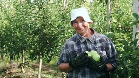 Senior lady and apples. Senior lady with apples. Elderly woman smiling, showing apple harvest. Garden female worker stock video