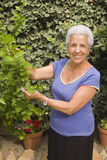 Senior lady in her garden. Senior lady looking after her plants Royalty Free Stock Images