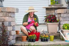 Senior lady potting up plants in flowerpots Royalty Free Stock Images