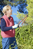 Senior lady pruning. The garden with large shears royalty free stock images