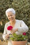 Senior lady pruning her plants. In her garden Royalty Free Stock Image
