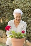 Senior lady pruning her plants. In her garden Royalty Free Stock Photography