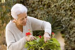 Senior lady pruning her plants. In her garden Stock Images