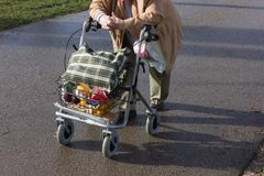 senior lady with rollator on sunny winter january afternoon royalty free stock images