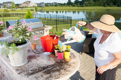 Senior lady watering her newly potted plants Royalty Free Stock Images