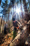 Senior lumberjacks cutting trees Stock Images