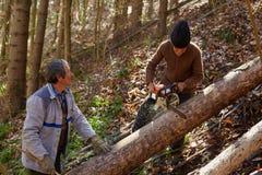 Senior lumberjacks cutting trees Stock Photos