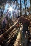Senior lumberjacks cutting trees Royalty Free Stock Photo