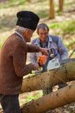 Senior lumberjacks cutting trees Stock Image